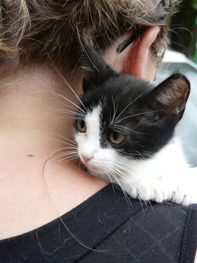 Tara, chaton noir et blanc P1060218