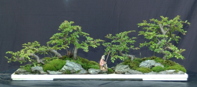 """S"" styled chinese elm used for penjing Penjin10"