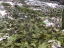 Rubrique mycologique - Page 8 01120