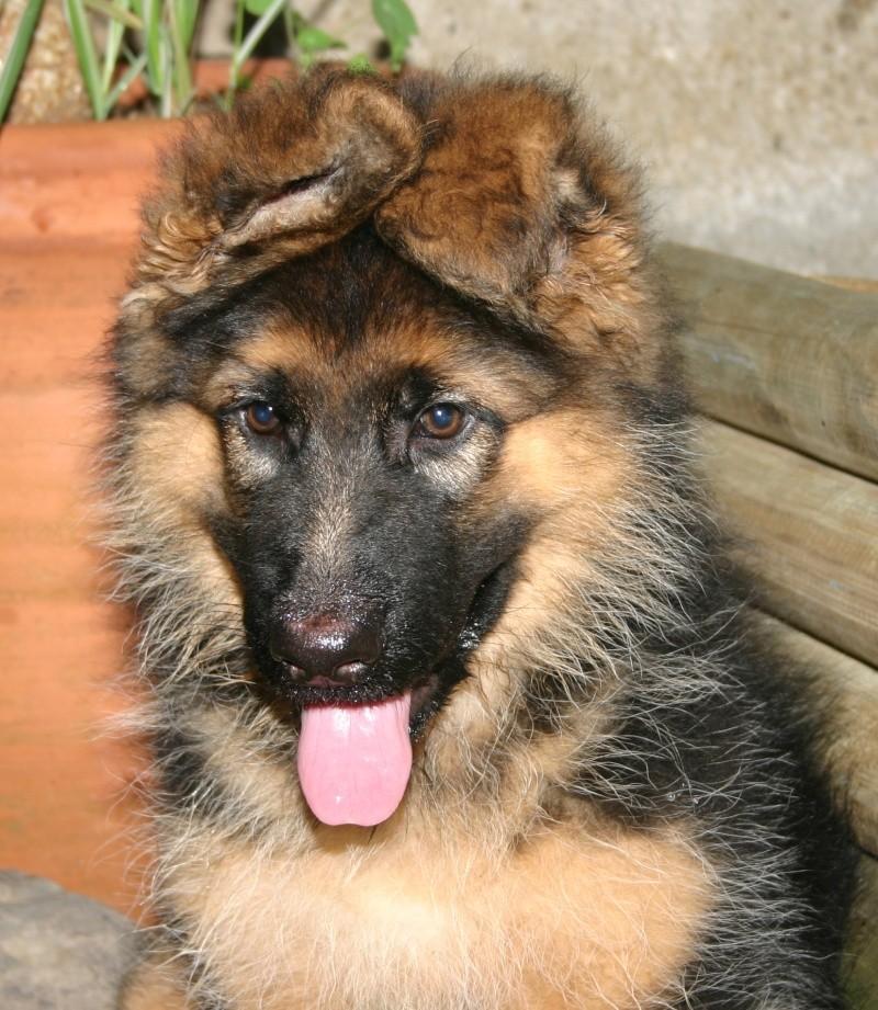 ♥♥♥ Mes adorables toutous... photos de complicité avec mes chiens de prairie... ♥♥♥ 2008_010