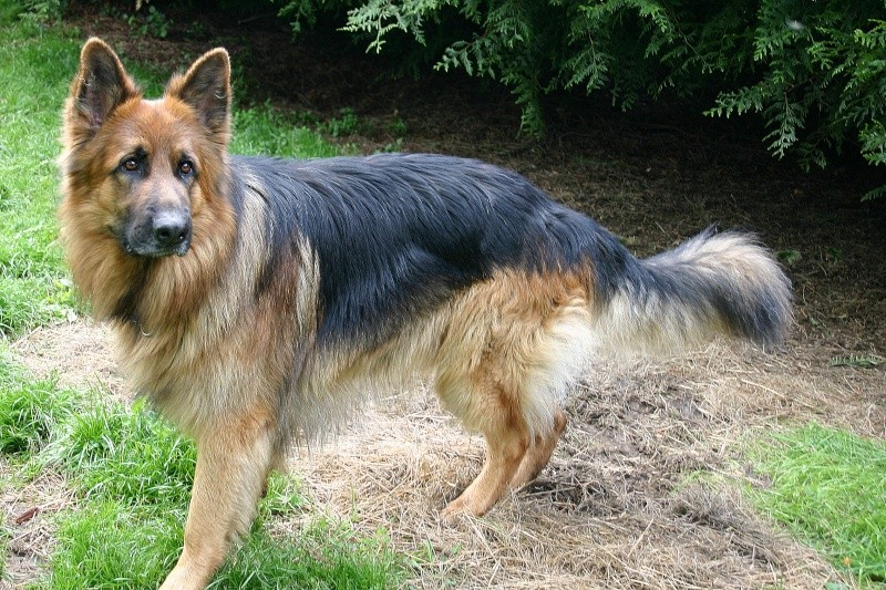 ♥♥♥ Mes adorables toutous... photos de complicité avec mes chiens de prairie... ♥♥♥ Copie_10