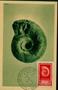 Cartes Maximum av.62 Image113