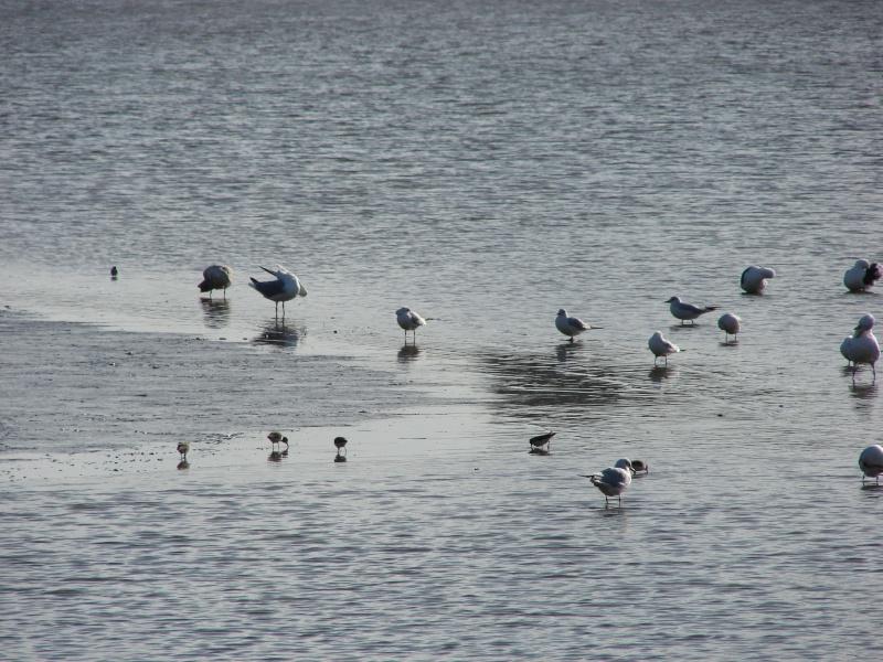 identification oiseaux marins Dsc04710