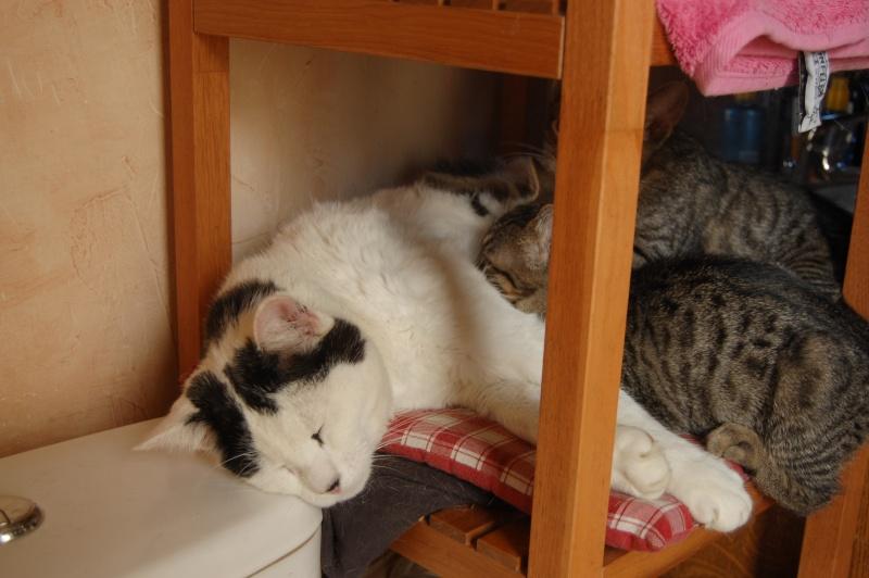 HERMIONE et CASSIOPEE, chatonnes tigrées, nées mi-mai (60) Dsc_0026
