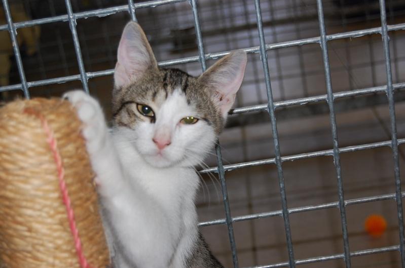Lino et Nolan, chatons nés le 1er avril, sauvetage suite à expulsion dans le 60 Dsc_0215