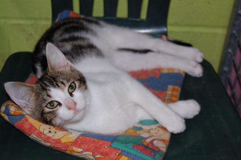 Lino et Nolan, chatons nés le 1er avril, sauvetage suite à expulsion dans le 60 Dsc_0216
