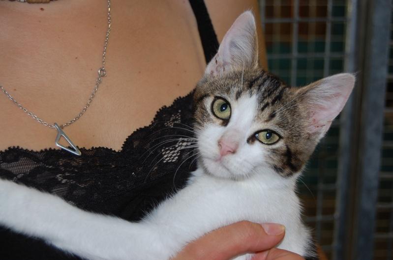 Lino et Nolan, chatons nés le 1er avril, sauvetage suite à expulsion dans le 60 Dsc_0217