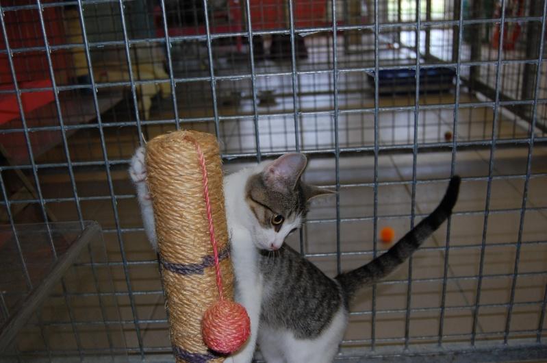 Lino et Nolan, chatons nés le 1er avril, sauvetage suite à expulsion dans le 60 Dsc_0218