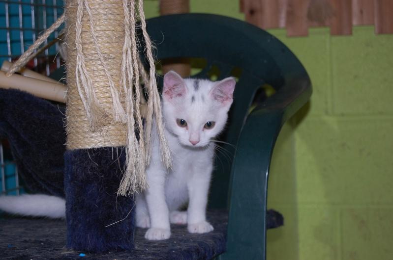 Yin et Yang, chatons mâles nés le 1er mai: un mauvais début dans la vie... (60) Dsc_0230