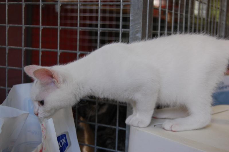 Yin et Yang, chatons mâles nés le 1er mai: un mauvais début dans la vie... (60) Dsc_0232