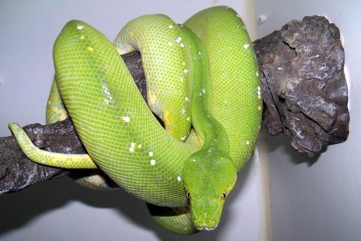 Un peu de vert à l' élevage  Fem-ar10