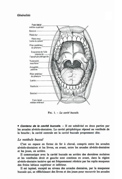 anatomie - anatomie dentaire  de Alain Lautrou [les 3 premiers chapitres] Sans_t12