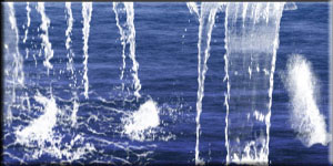 PINCELES-BRUSHES-AGUA-WATER Wateri11