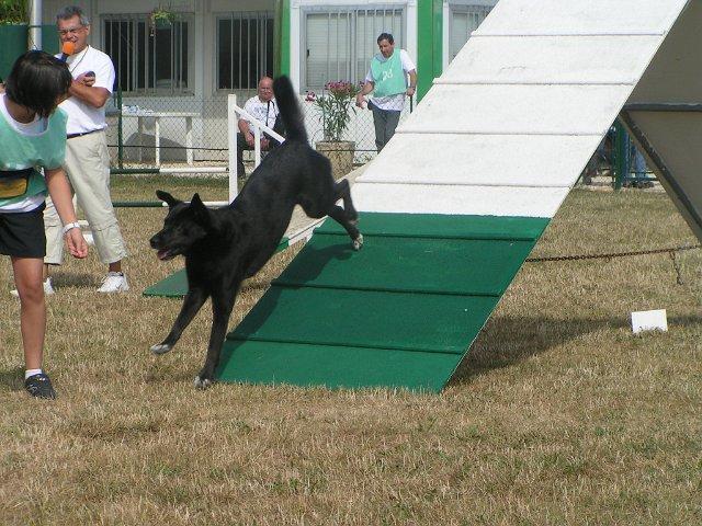 Vos activités canines : en club......ou pas ! Pict0011