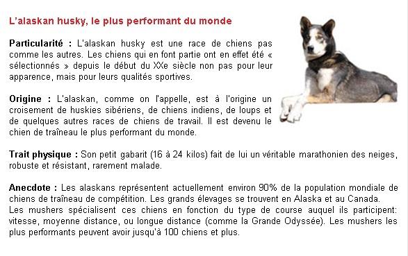 Quelques rappels sur les chiens de races nordiques P210