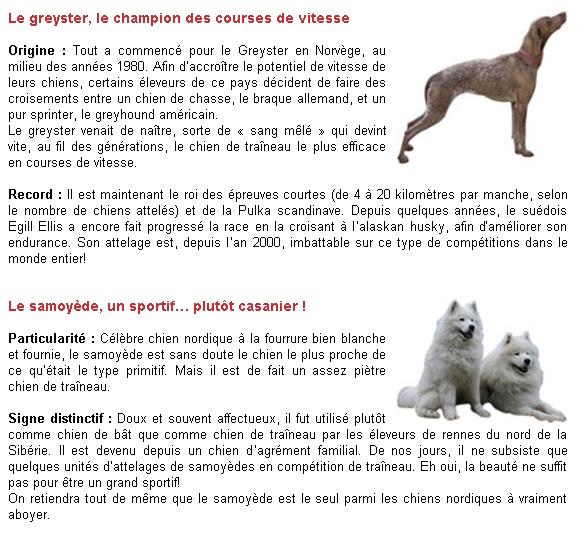 Quelques rappels sur les chiens de races nordiques P410
