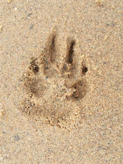 è morto il cane Schoep..  09203211