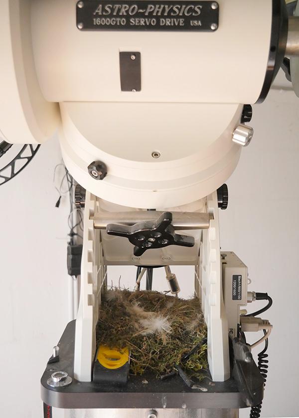 Un observatoire pour y faire son nid.. Les astros aiment les oiseaux ! Nid110
