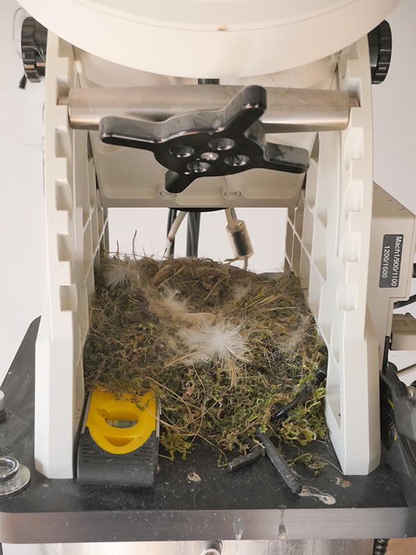 Un observatoire pour y faire son nid.. Les astros aiment les oiseaux ! Nid210