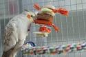 2- Le respect des besoins de nos perruches et perroquets Dsc_8410