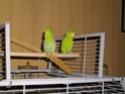 2- Le respect des besoins de nos perruches et perroquets Imgp0210