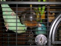 2- Le respect des besoins de nos perruches et perroquets Imgp1311