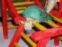 2- Le respect des besoins de nos perruches et perroquets Imgp1914
