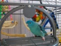 2- Le respect des besoins de nos perruches et perroquets Lola_810