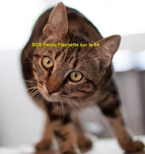 chat tigré perdu sur le perreux ou dans les environs 94 Fleche10