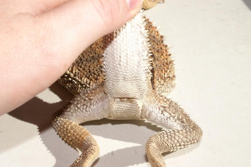 Male ou Femelle? Pict1211