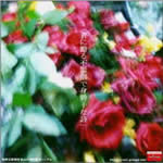 Single. Kimi ni okuru bukyou de migatte na shi. 12/11/2005 Kimi_n10