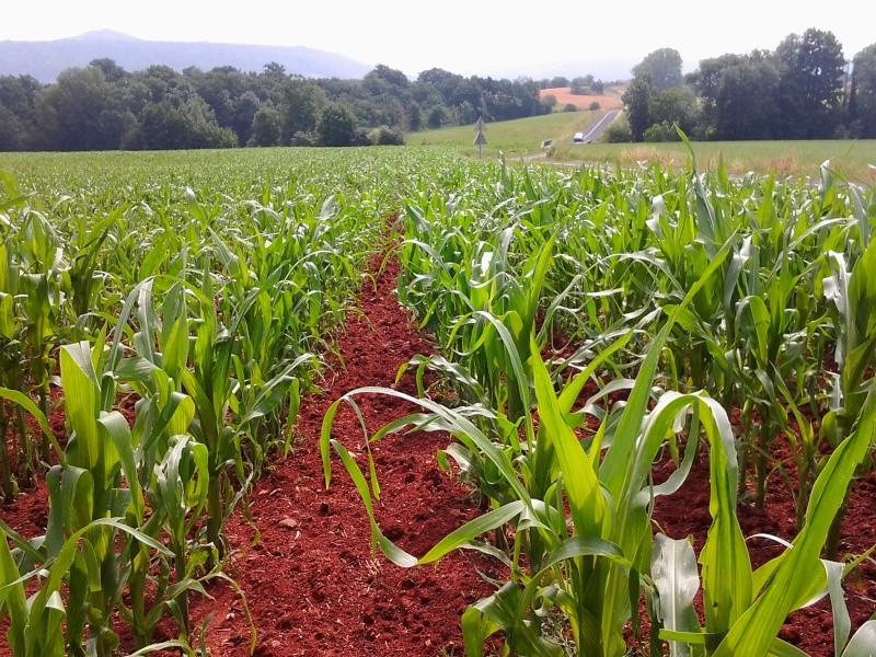 semis de maïs 2013  - Page 17 Photo011