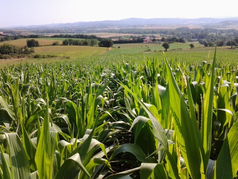 semis de maïs 2013  - Page 20 Photo015