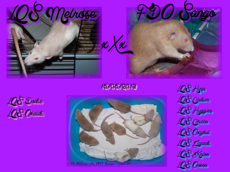 LOS Melrose ♥♥♥ FDO Sango Melros10