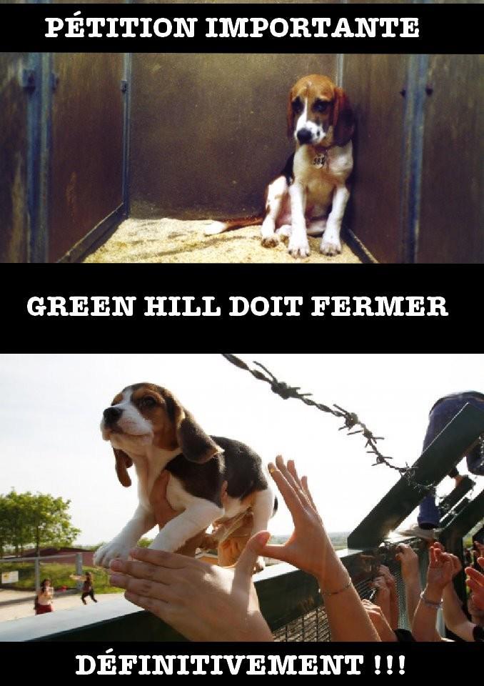 Fermons Green hill ! 29244710