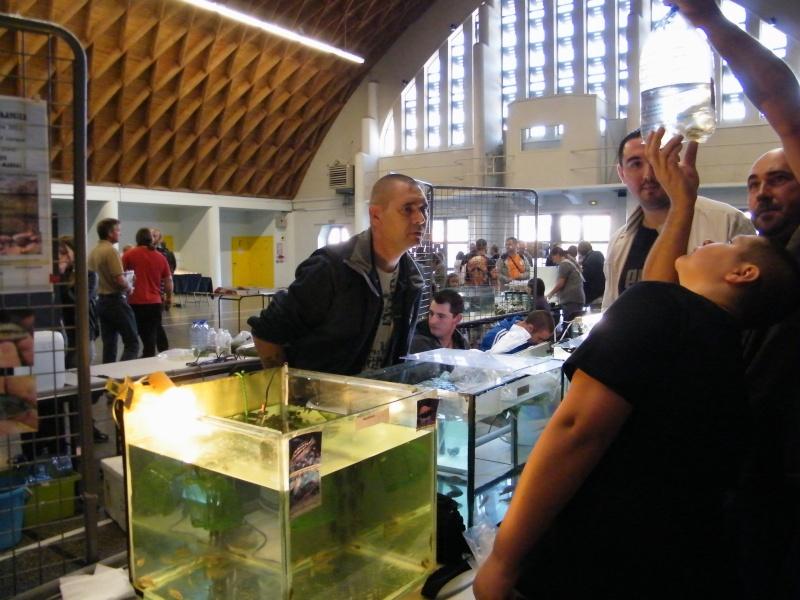 Bourse de villers bretonneux (80)-4eme edition- Dscf7414
