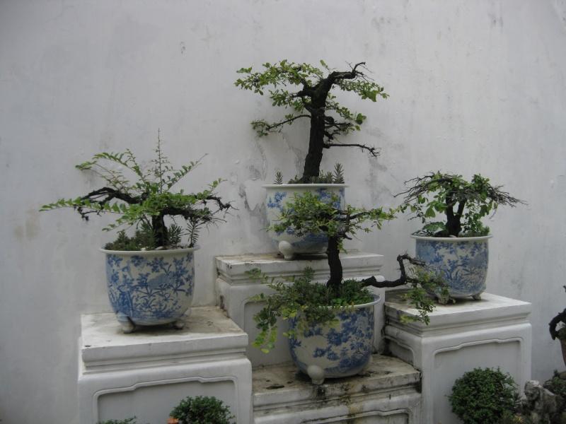 plantes tropicales Img_6410