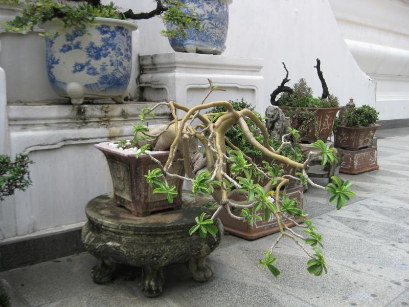 plantes tropicales Img_6412