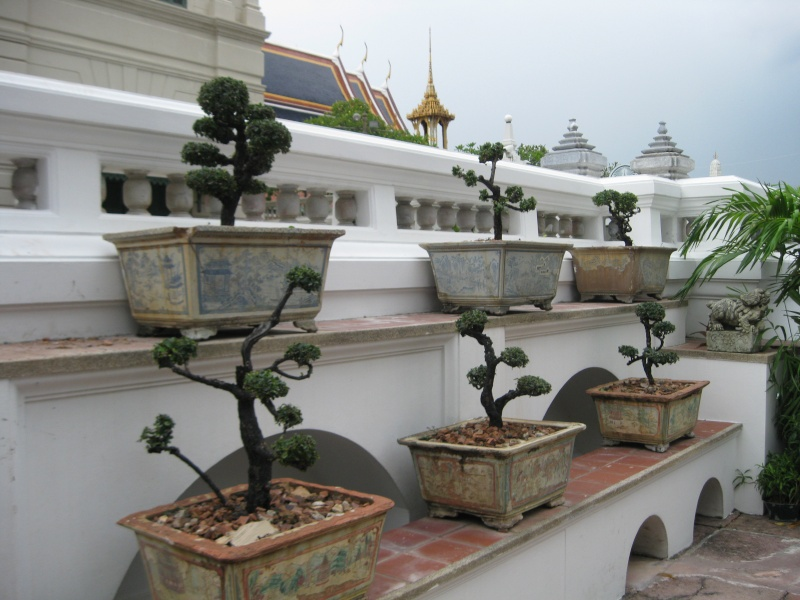 plantes tropicales Img_6510