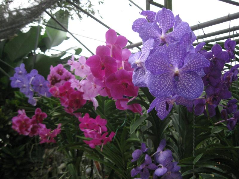 plantes tropicales Img_7010