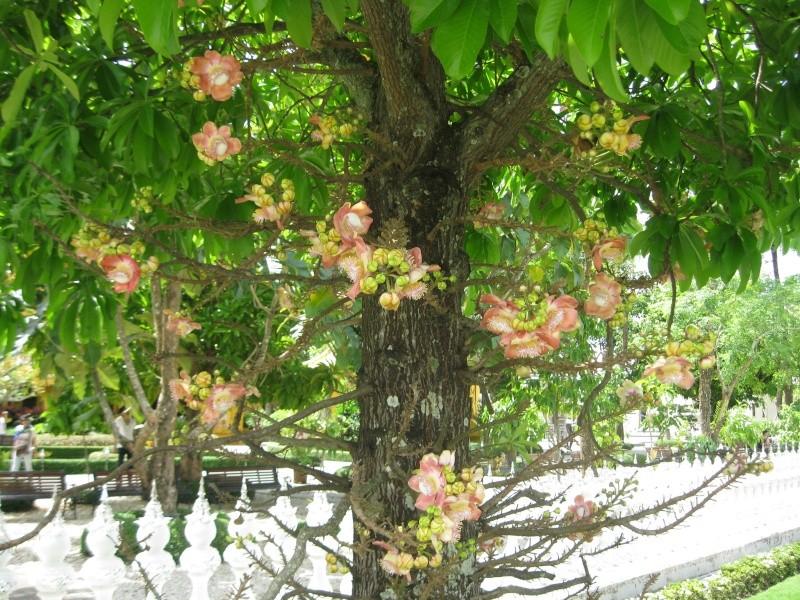 plantes tropicales Img_7310