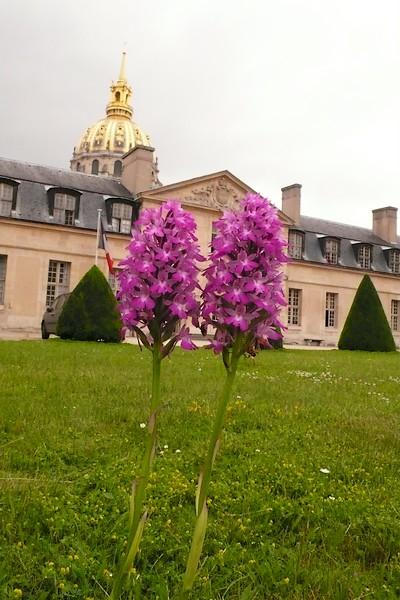 Les Orchidées sauvages de Paris P1000510