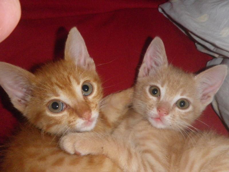 Donne chatons nés le 28 mai Imgp0610