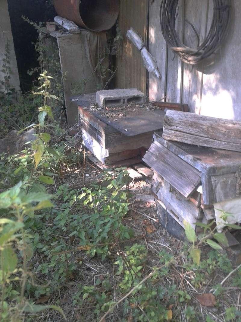 visite d'un rucher qui n'a pas été vu depuis près de 5 ans... - Page 3 2012-017