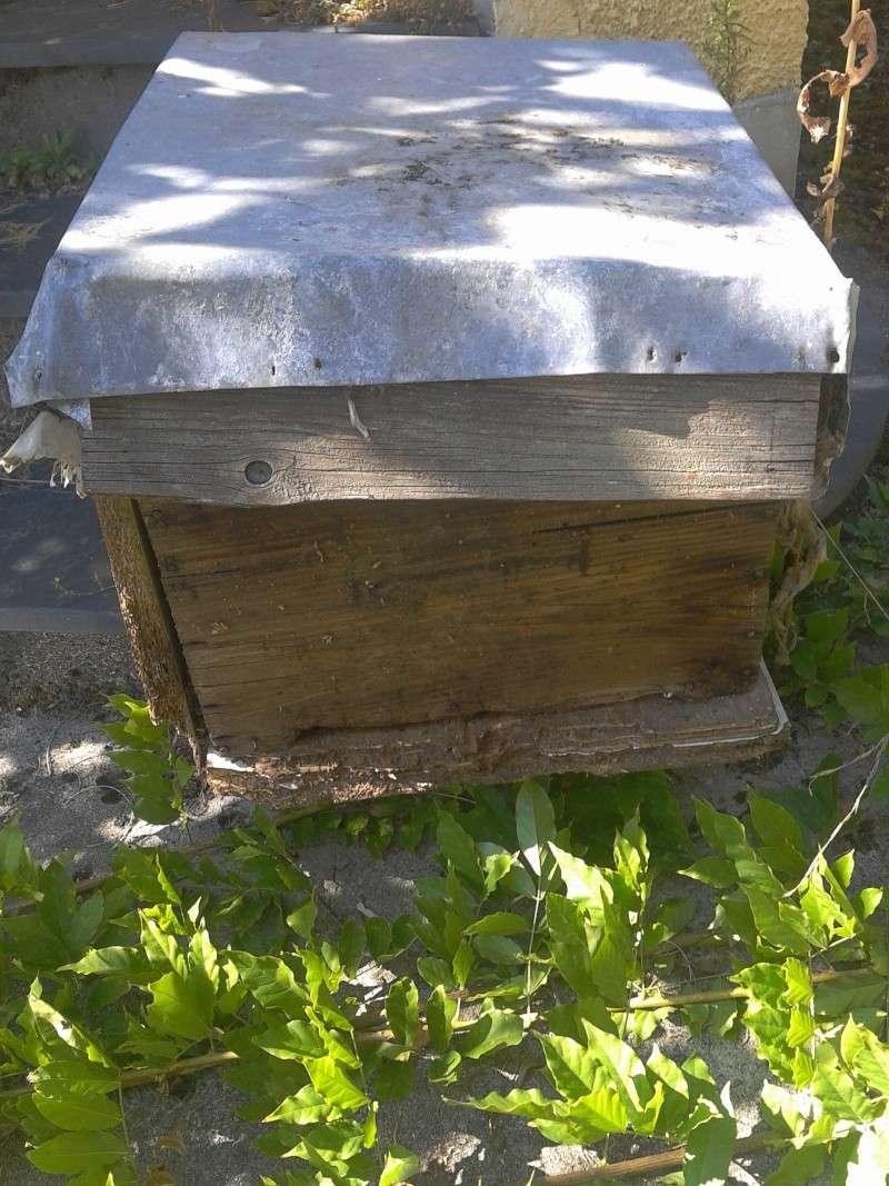 visite d'un rucher qui n'a pas été vu depuis près de 5 ans... - Page 3 2012-018