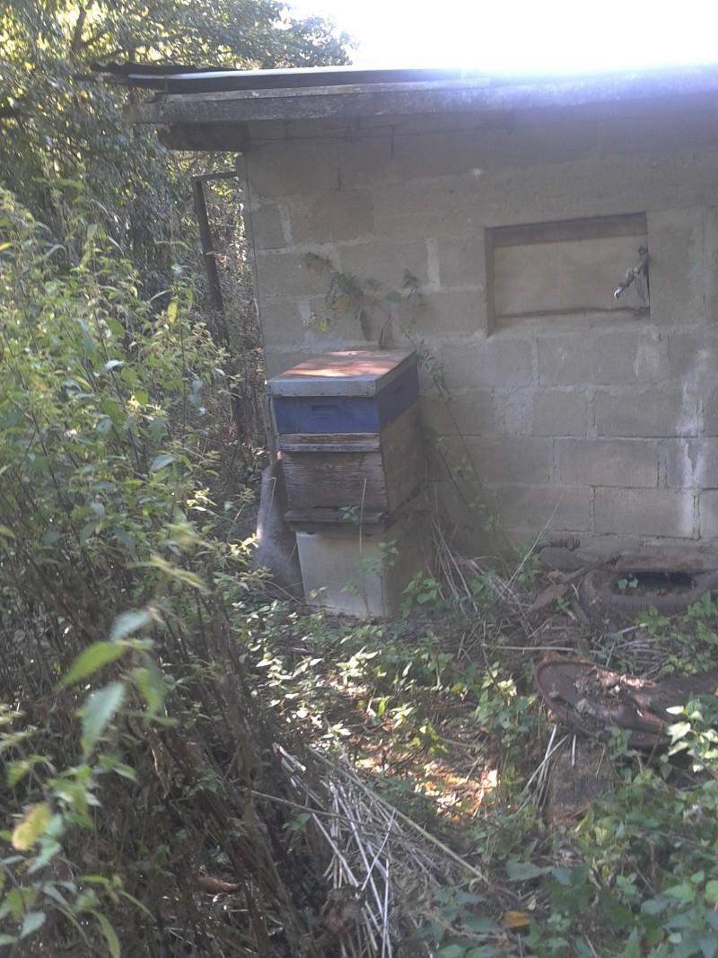 visite d'un rucher qui n'a pas été vu depuis près de 5 ans... - Page 3 2012-020