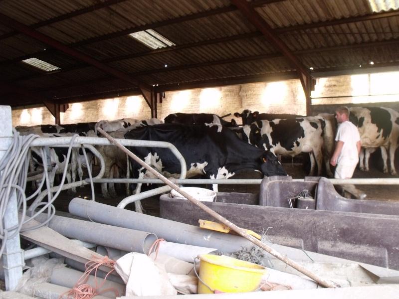 visite de la ferme de ma tante (suite) Dscf0429