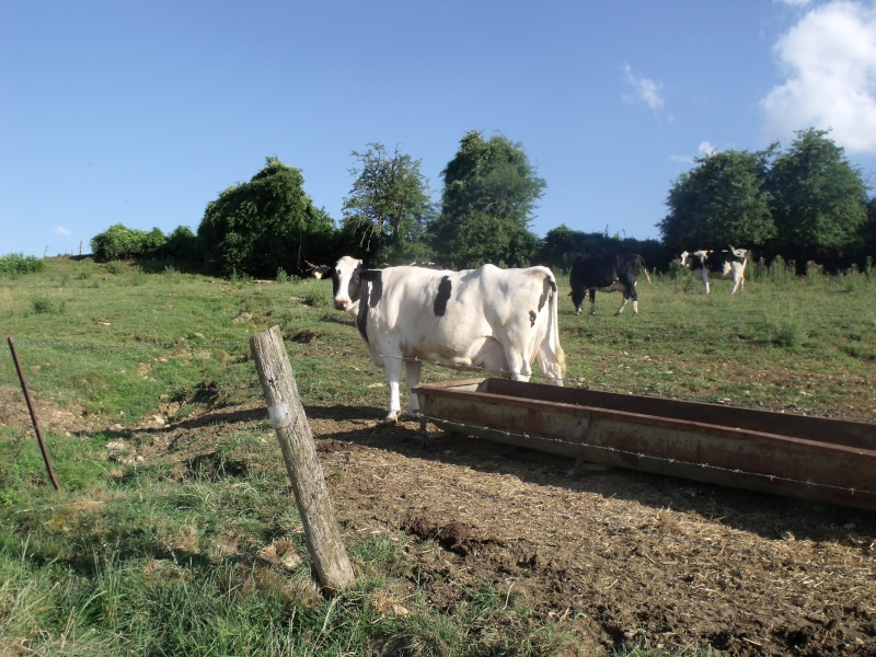 visite de la ferme de ma tante (suite) Dscf0513