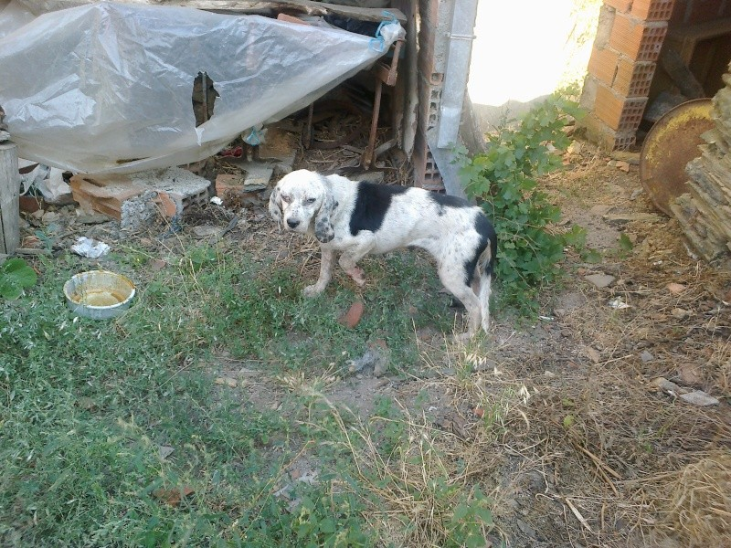 Aide Urgent, pour une chienne très mal en point! 03082010