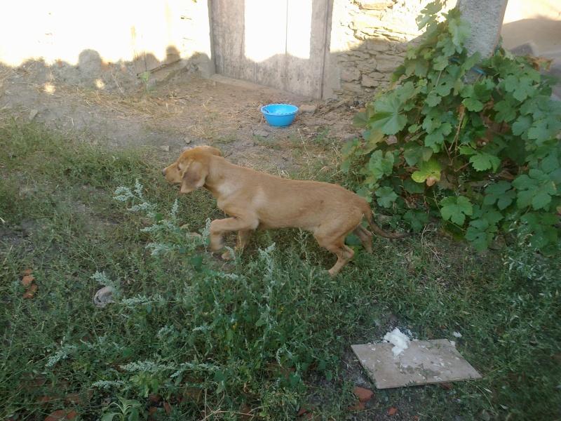 Aide Urgent, pour une chienne très mal en point! 03082011